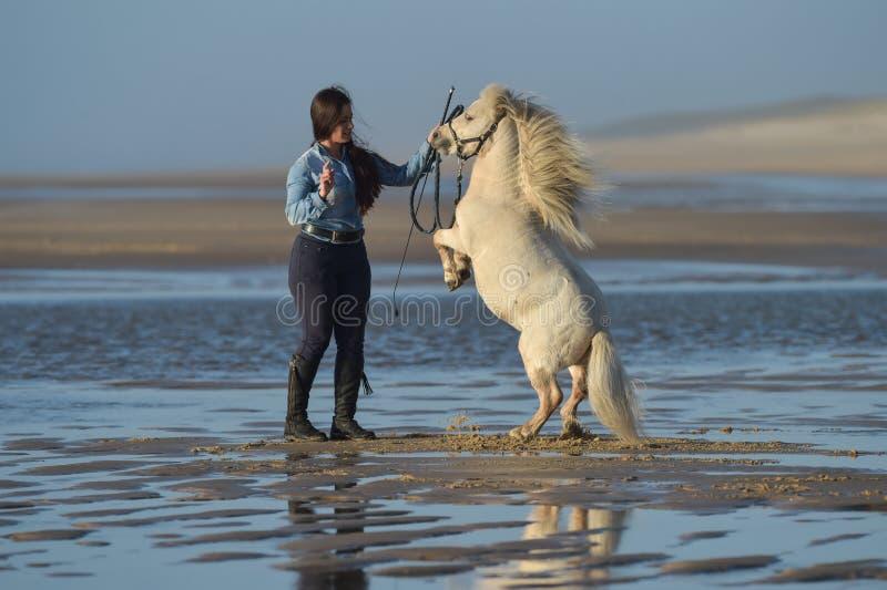 Młoda dama jedzie konika przy plażą w wczesnym poranku obraz stock