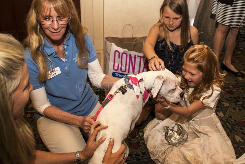 Młoda dziewczyna chwytów pies od zwierzę domowe ratuneku zdjęcia royalty free