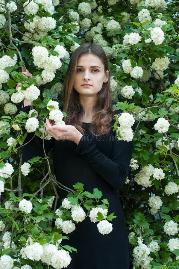 Młoda dziewczyna na tle kwitnąć białego viburnum w wiosna sezonie obraz stock
