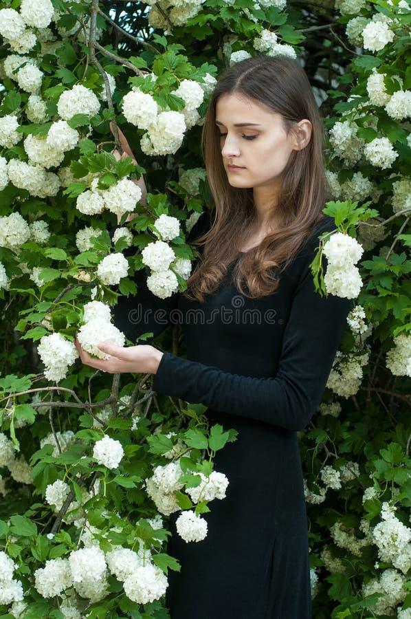 Młoda dziewczyna na tle kwitnąć białego viburnum w wiosna sezonie zdjęcie royalty free
