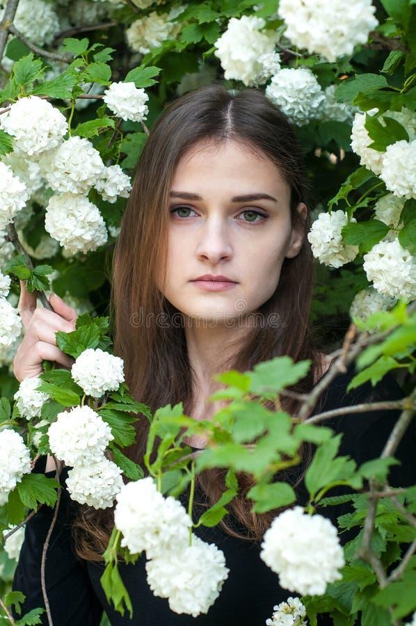 Młoda dziewczyna na tle kwitnąć białego viburnum w wiosna sezonie zdjęcia royalty free
