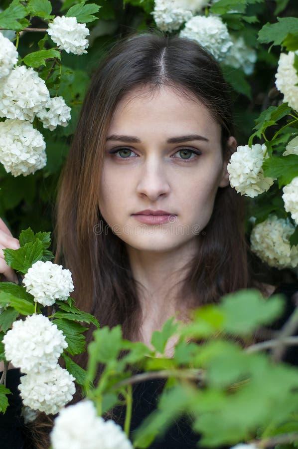 Młoda dziewczyna na tle kwitnąć białego viburnum w wiosna sezonie zdjęcia stock