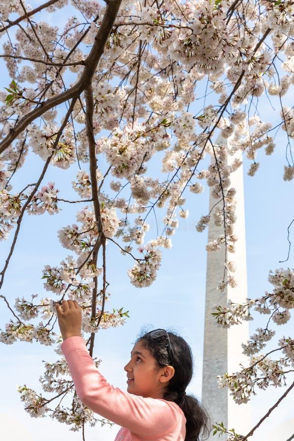 Młoda Dziewczyna Patrzeje Czereśniowych okwitnięcia w washington dc z Waszyngtońskim zabytkiem w tle obraz stock