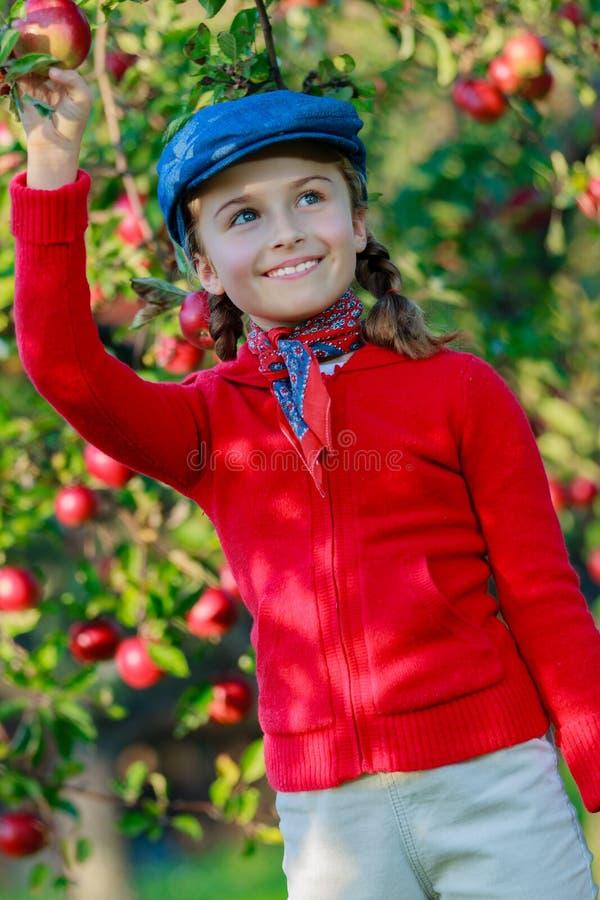 Młoda dziewczyna podnosi organicznie jabłka w Basket.Orchard. obraz stock