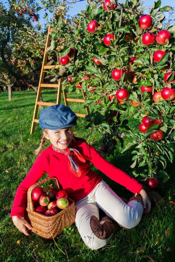 Młoda dziewczyna podnosi organicznie jabłka w Basket.Orchard. obraz royalty free