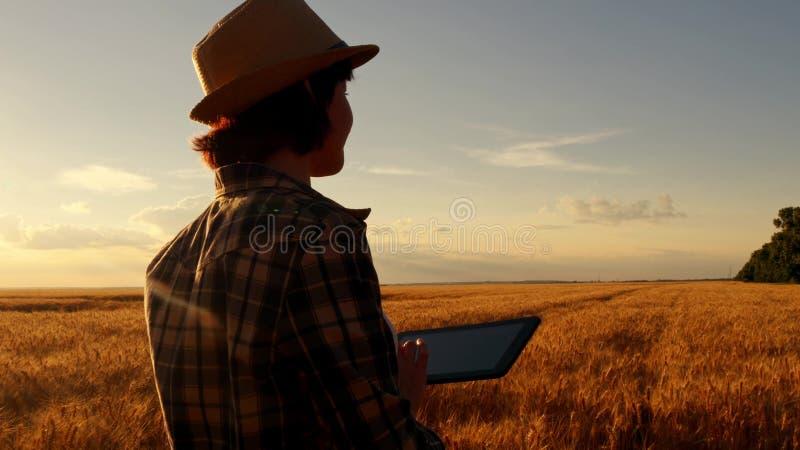 Młoda dziewczyna rolnik w pszenicznym polu na zmierzchu tle dziewczyna używa pastylkę, plany zbierać obraz royalty free