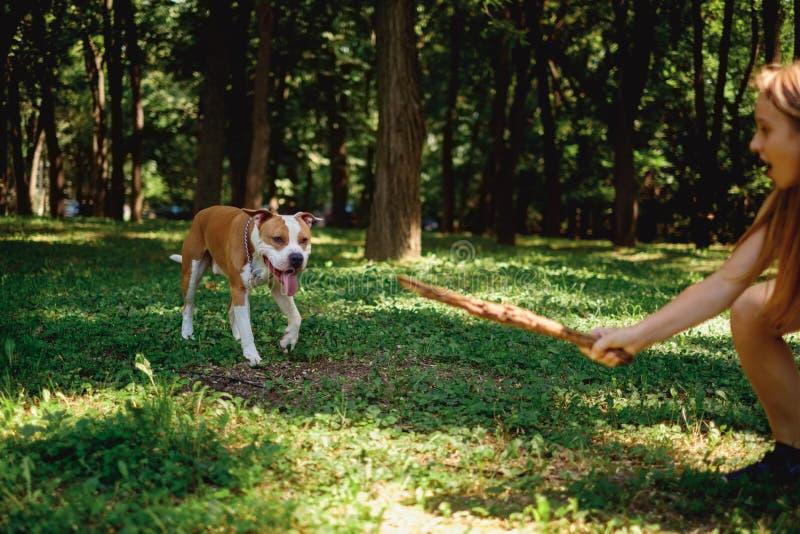 Młoda dziewczyna trzyma kij dla jej psa w parku zdjęcie stock