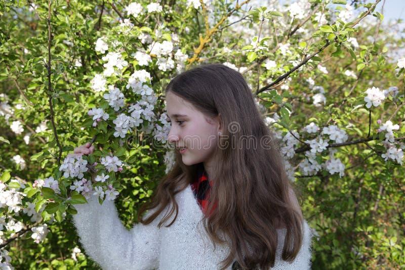 Młoda dziewczyna z długie włosy w białym pulowerze w kwitnie jabłko ogródzie w wiośnie zdjęcie royalty free