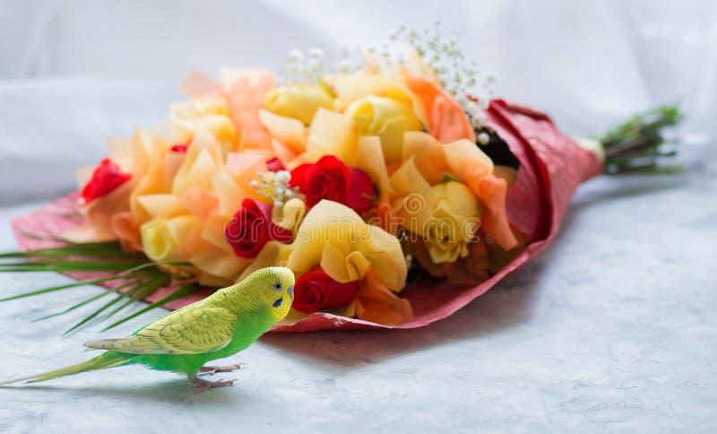 Młoda falista papuga i bukiet róże na białej powierzchni czerwone i żółte fotografia royalty free