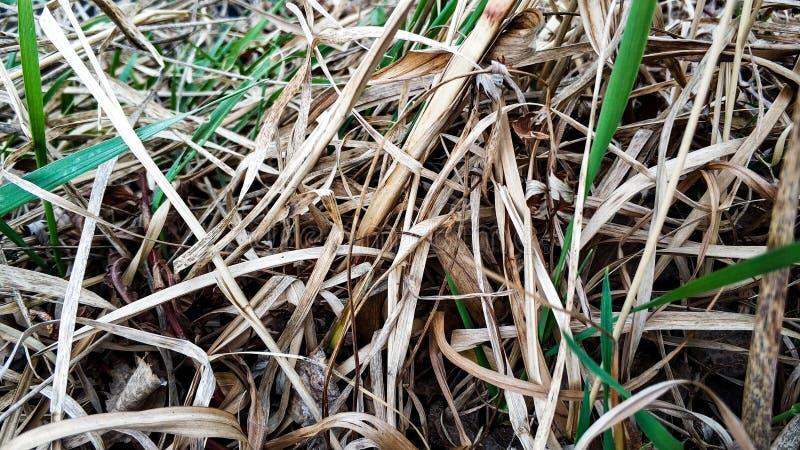 Młoda i sucha trawa blisko jeziornego zbliżenia obrazy stock