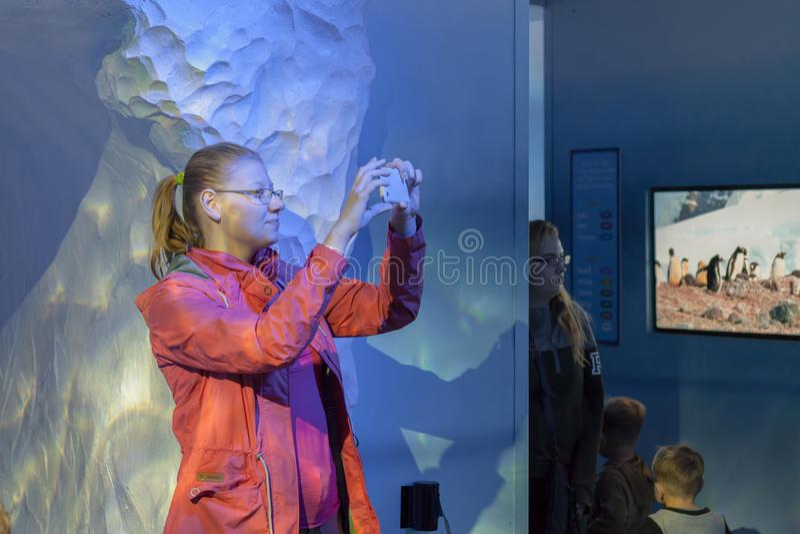 Młoda kobieta bierze fotografię w Dennego życia Londyn akwarium zdjęcia royalty free