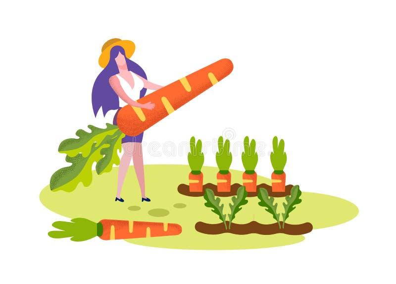 Młoda Kobieta chwyta marchewki Ogromny stojak na Ogrodowym łóżku royalty ilustracja