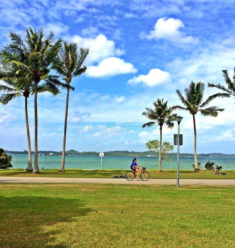 Młoda kobieta jedzie bicykl przy parkiem zdjęcia royalty free
