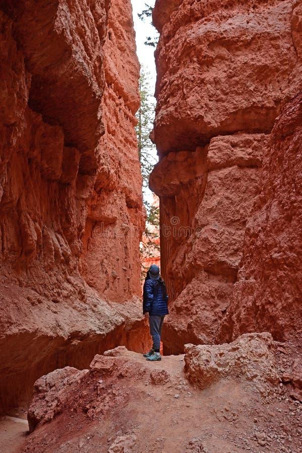 Młoda kobieta na Navajo pętli śladzie w Bryka jarze fotografia stock