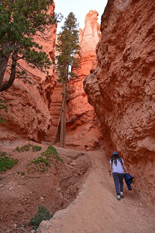 Młoda kobieta na Navajo pętli śladzie w Bryka jarze zdjęcie stock