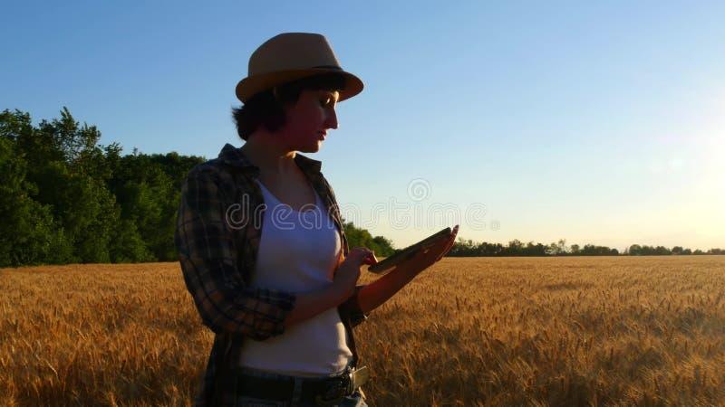 Młoda kobieta rolnik w pszenicznym polu na zmierzchu tle dziewczyna używa pastylkę, plany zbierać zdjęcie stock