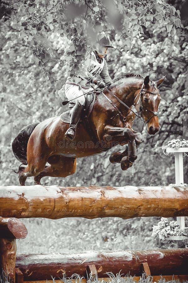 Młoda kobieta skacze konia podczas praktyki na przecinającego kraju eventing kursie, duotone sztuka zdjęcia stock