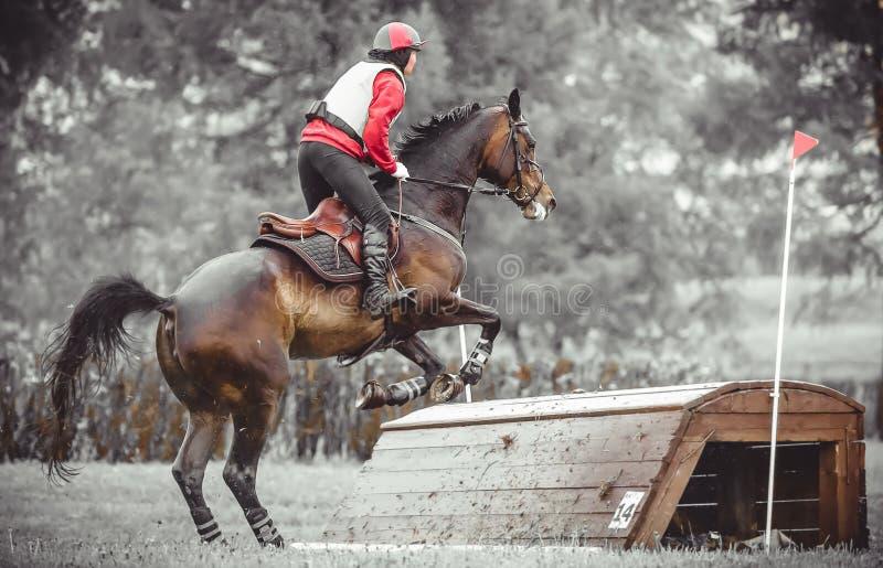 Młoda kobieta skacze konia podczas praktyki na przecinającego kraju eventing kursie, duotone sztuka obraz royalty free