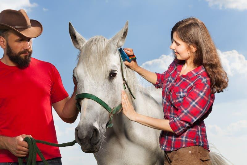 Młoda kobieta szczotkuje pięknego białego konia zdjęcia stock