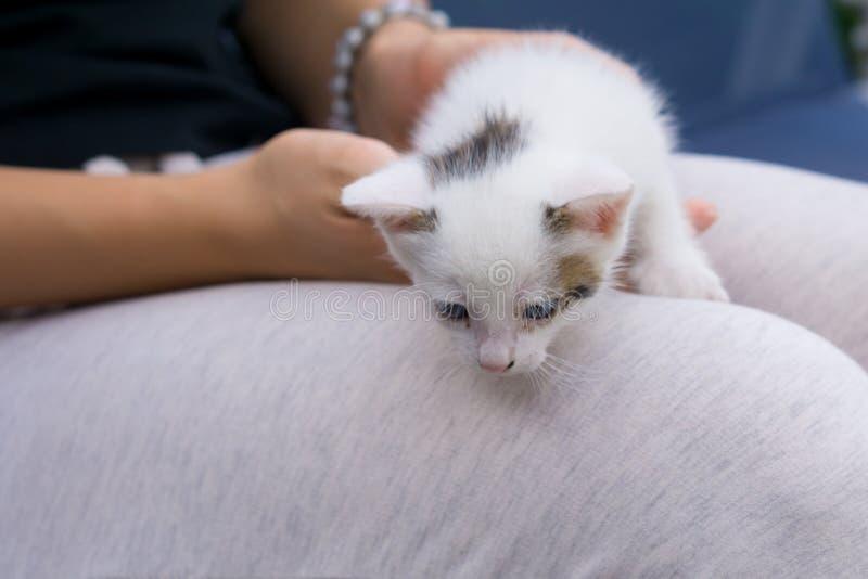 Młoda kobieta trzyma białego dziecko kota z rękami w ona podołek zdjęcie royalty free
