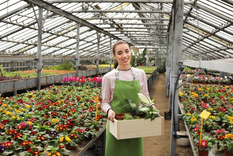 Młoda kobieta trzyma drewnianą skrzynkę z doniczkowymi roślinami w szklarni obraz stock