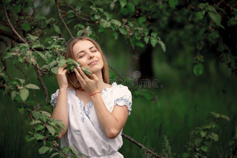 Młoda kobieta up na drabiny zrywania jabłkach od jabłoni dalej fotografia royalty free