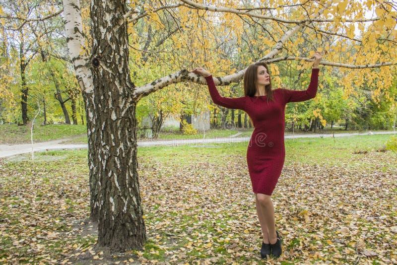 Młoda kobieta w jesień Kobieta w parku blisko żółtego ulistnienia obraz royalty free