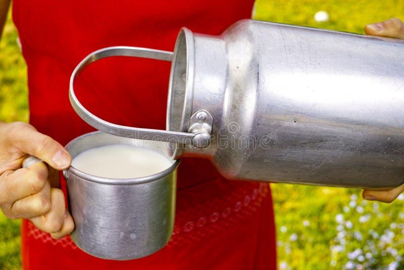 Młoda kobieta z świeżym organicznie rolnym cowmilk w aluminium mleka puszce zdjęcie royalty free