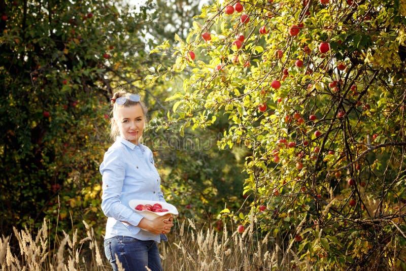 Młoda kobieta z jabłkami w kapeluszu stoi w jabłko ogródzie na pogodnym jesień dniu poj?cie zdrowego stylu ?ycia zdjęcia royalty free