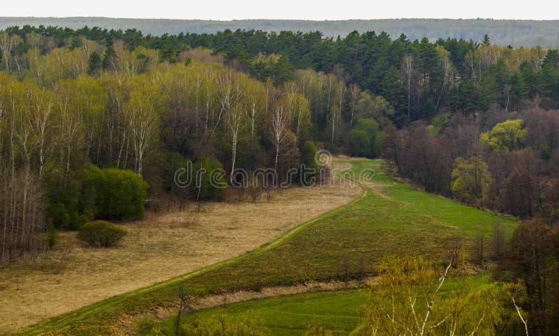 Młoda lasowa łąka Wiosna w środkowym Rosja zdjęcie royalty free