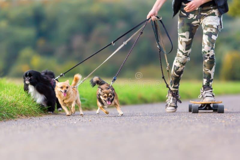 Młoda osoba z deskorolka i trzy psami fotografia royalty free