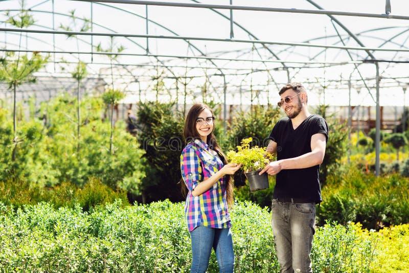 Młoda para, chłopiec w czarnej koszulce i dziewczyna w szkłach, utrzymujemy garnek z zieloną rośliną Robi? zakupy w szklarni zdjęcia stock