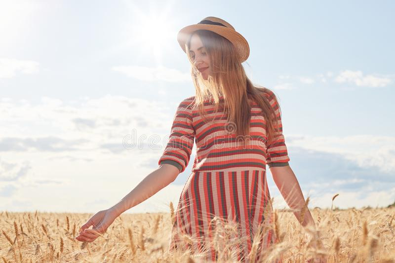 Młoda romantyczna kobieta ma spacer w słonecznym dniu, być przy pszenicznym polem, dotykający podkrada się z rękami i obdzierał,  zdjęcia royalty free