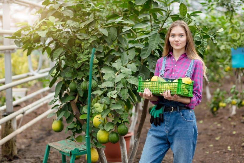 Młoda utalentowana ogrodniczka dokonywał dokumentacyjnych żniwa zdjęcia stock