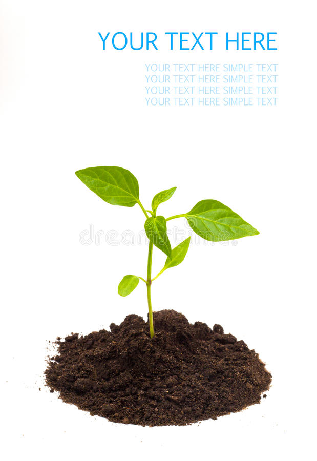 Młoda zielona roślina odizolowywająca na białym tle z przestrzenią dla teksta zdjęcie stock