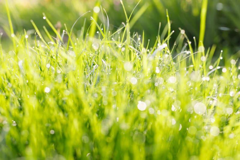 M?oda zielona trawa z kroplami rosa w promieniach ranku s?o?ce obrazy royalty free