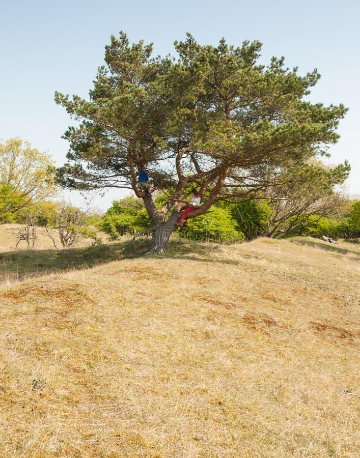 Młode dzieci wspina się w drzewie obraz royalty free