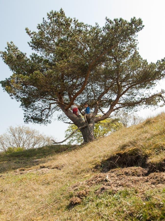 Młode dzieci wspina się w drzewie obrazy stock