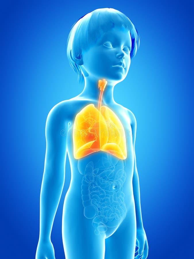 młode dziecko - płuco ilustracja wektor