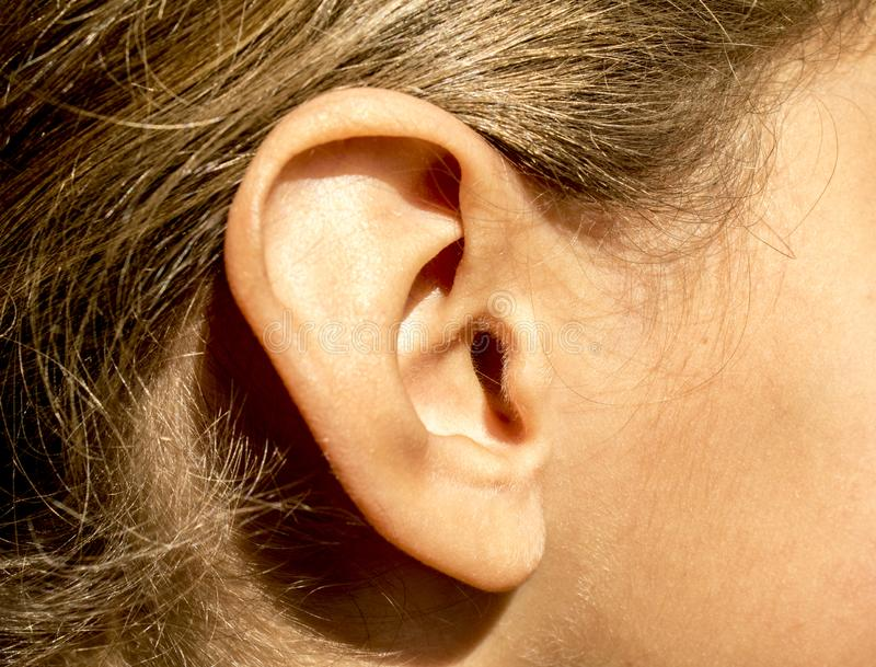 Młode dziewczyny wyprostowywają ucho z włosy i dziecko włosy na twarzy obrazy stock