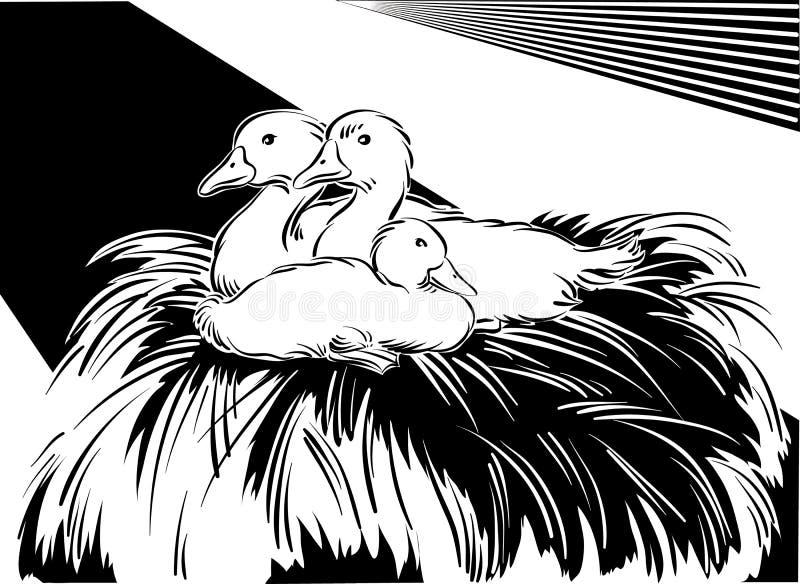 Młode gąski w gniazdeczku ilustracji