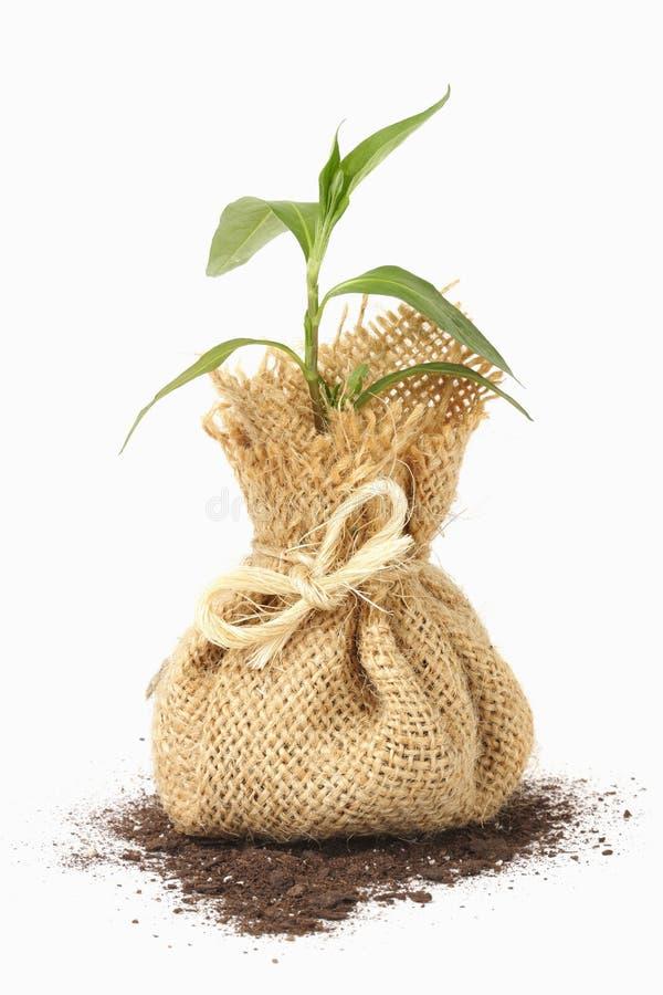 młode rośliny torby fotografia stock