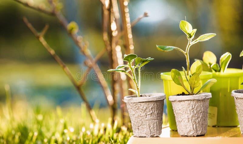 Młode rośliny w świetle słonecznym fotografia stock