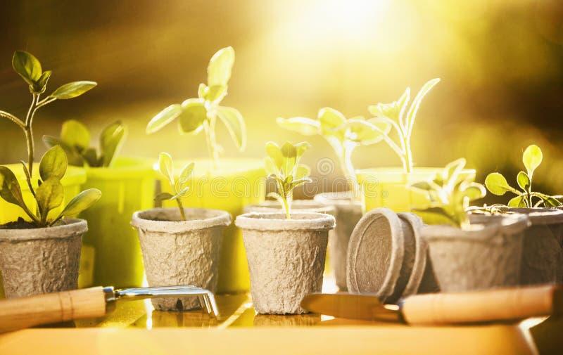 Młode rośliny w świetle słonecznym fotografia royalty free
