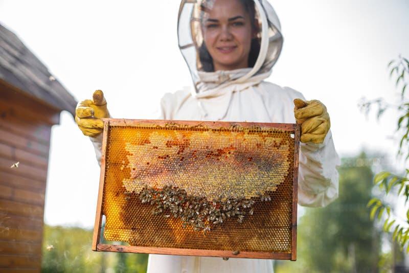 Młodego żeńskiego pszczelarka chwyta drewniana rama z honeycomb Zbiera miód Beekeeping pojęcie obrazy stock