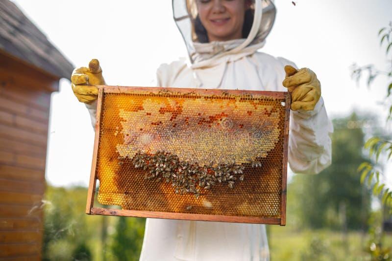 Młodego żeńskiego pszczelarka chwyta drewniana rama z honeycomb Zbiera miód Beekeeping pojęcie zdjęcia stock