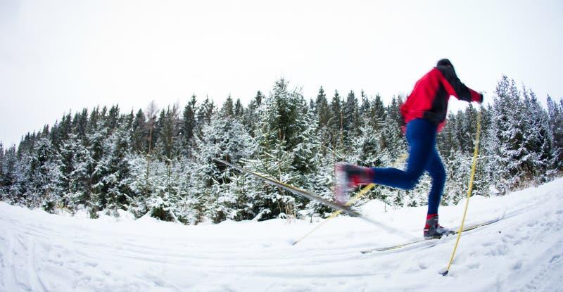 Młodego człowieka przez cały kraj narciarstwo na śnieżnym lasowym śladzie obraz royalty free