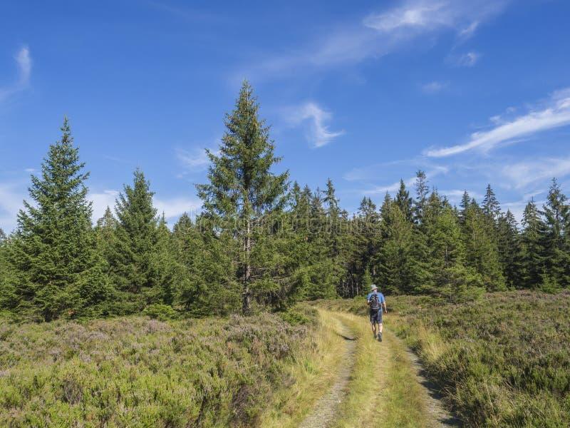 Młodego człowieka wycieczkowicz z plecaka i kapeluszu odprowadzeniem na wijącym lesie tropi drogę w Brdy halnych wzgórzach z ziel fotografia stock