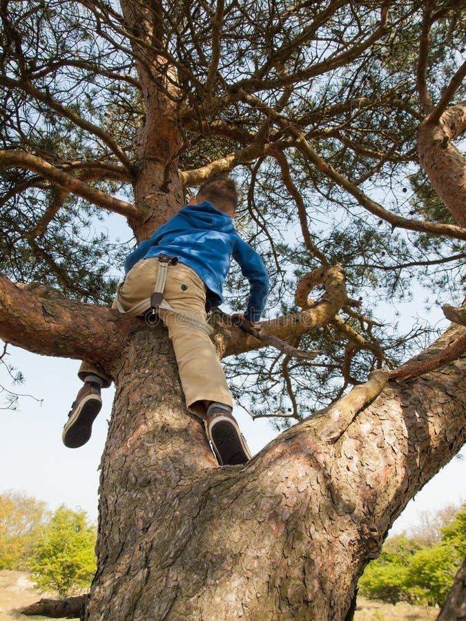 Młodego dziecka drzewa pięcie obraz stock
