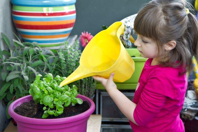 Młodej dziewczyny podlewania basilu rośliny ono uśmiecha się zdjęcia stock